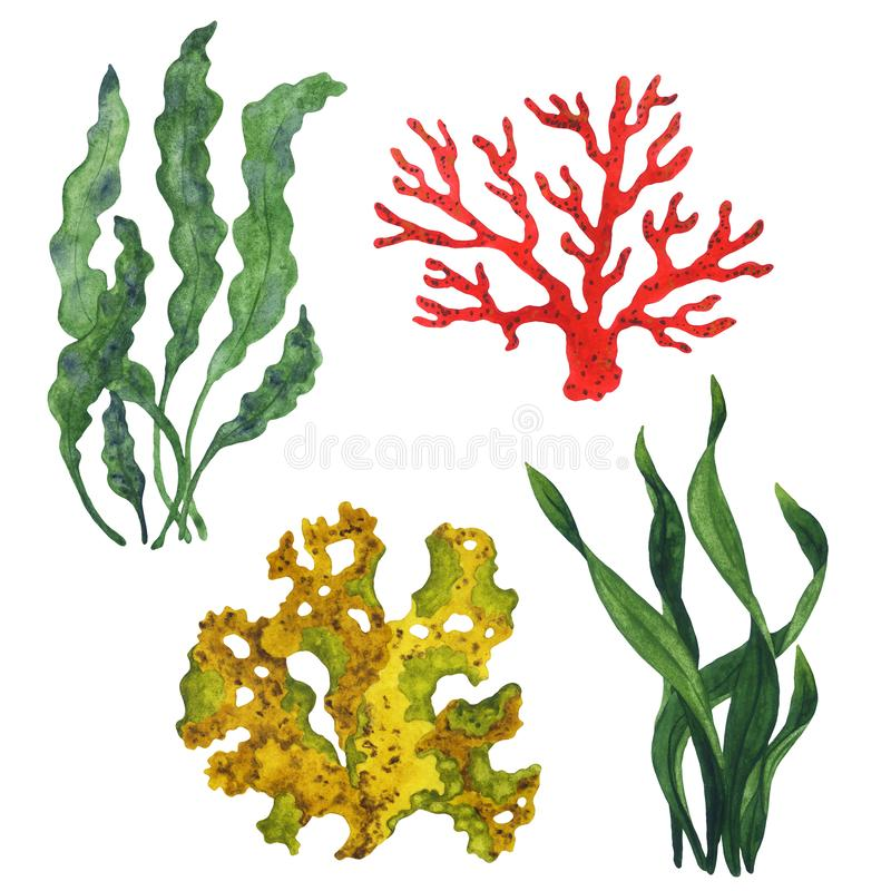 Set of isolated watercolor corals and algae. Corals and algae for textile, design, invitation or print vector illustration
