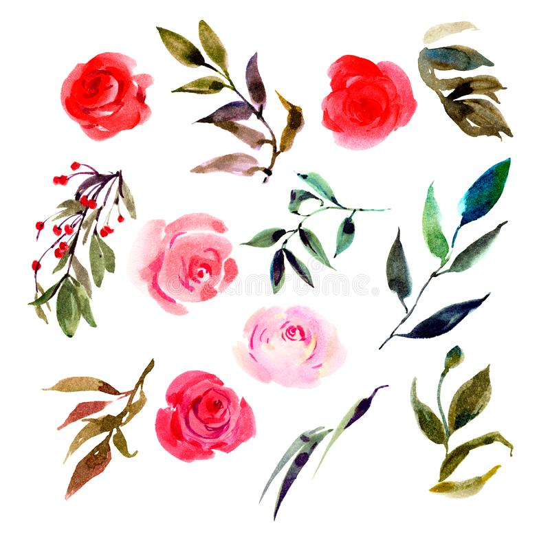 Set of isolated watercolor pink roses, leaves, plants. Isolated buds and foliage stock illustration