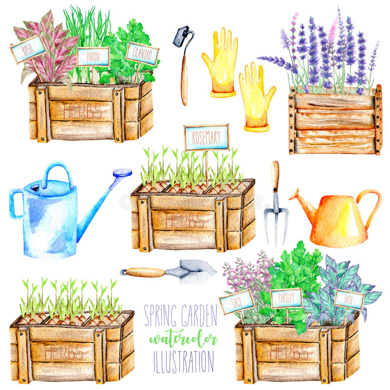 A set with the isolated watercolor spices spicy herbs and garden tools. A set with the isolated watercolor garden tools and spices spicy herbs: onion green, sage royalty free illustration