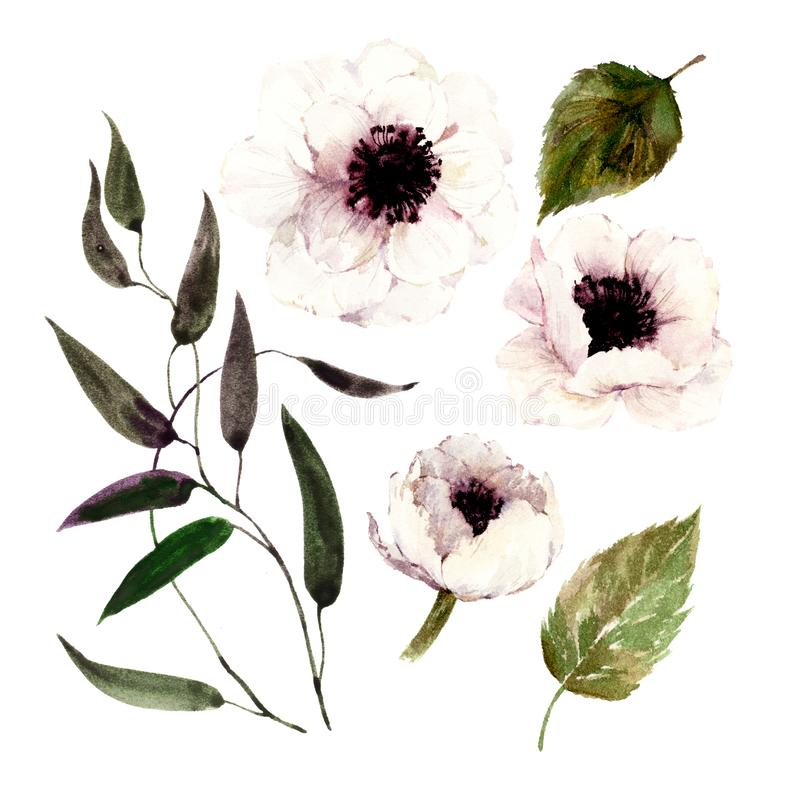 Set of isolated watercolor white poppies, leaves, branch. vector illustration