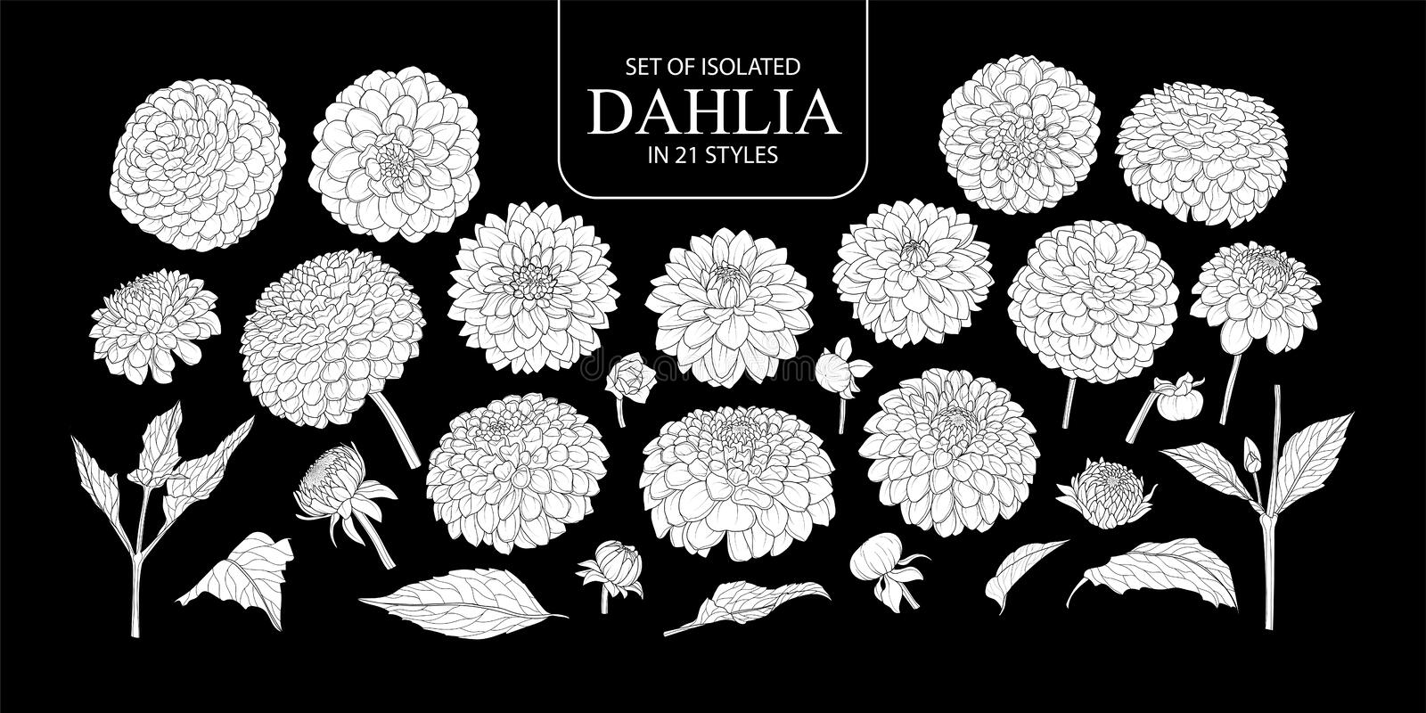 Set of isolated white silhouette Dahlia in 21 styles. Cute hand drawn flower vector illustration in white plane without outline on black background royalty free illustration
