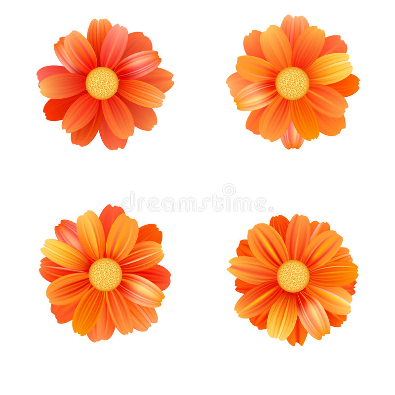 Set of isolated yellow gerbera or daisy. Vector colorful flowers on white background. Template for for t-shirt, fashion stock illustration