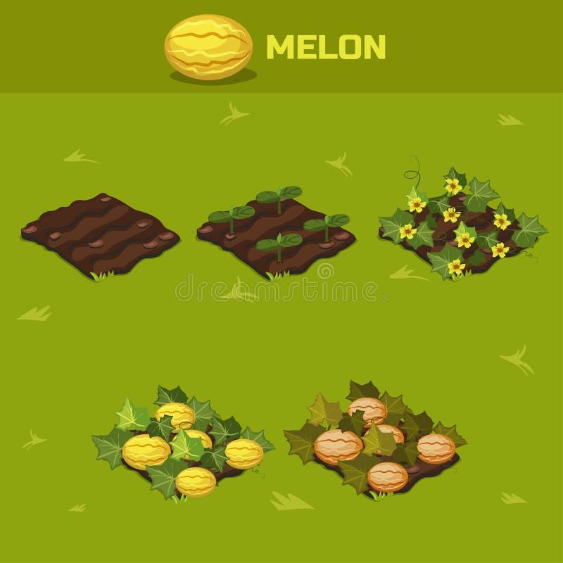 Set 6 Isometric scena wzrostowy melon ilustracji
