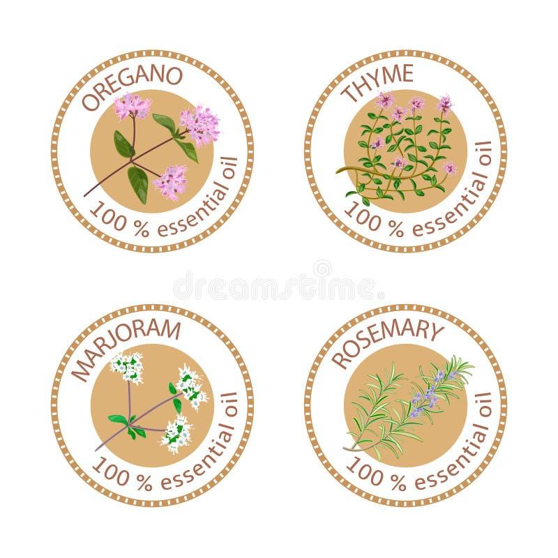 Set istotnych olejów etykietki Oregano, macierzanka, lebiodka, rozmaryny ilustracja wektor