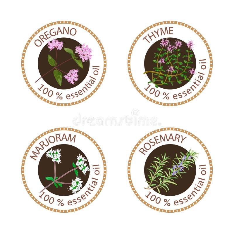 Set istotnych olejów etykietki Oregano, macierzanka, lebiodka, rozmaryny royalty ilustracja