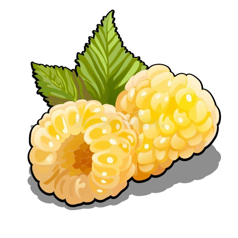 Set jagod malinek żółte owoc lub Rubus idaeus z zielonymi liśćmi Element zdrowa dieta Wyśmienicie i ilustracja wektor