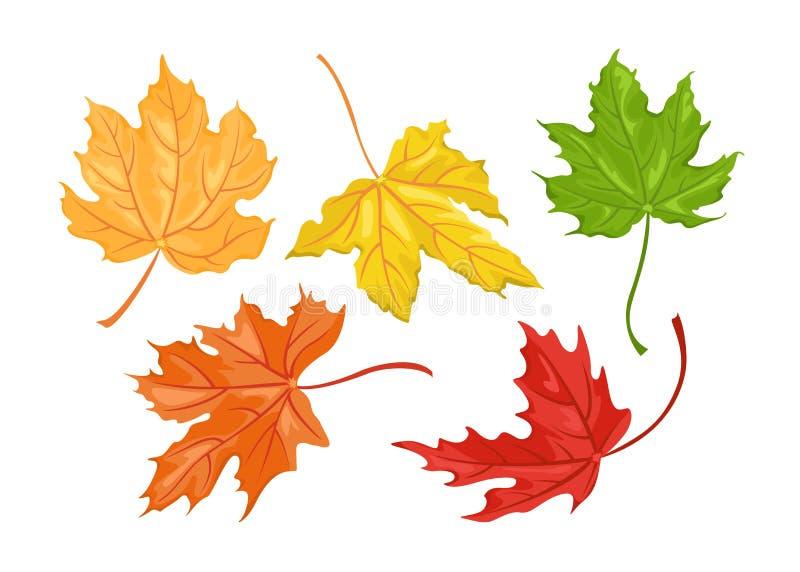 Set jesień barwioni liście klonowi ilustracji