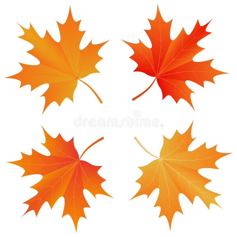 Set jesień liść klonowy ilustracja wektor