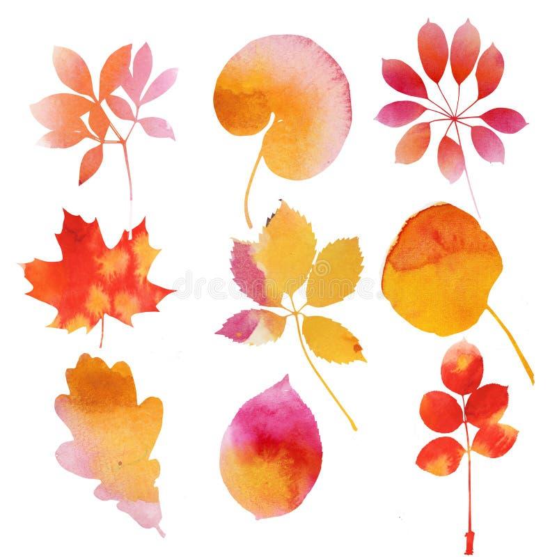 Set jesieni akwareli liście ilustracji