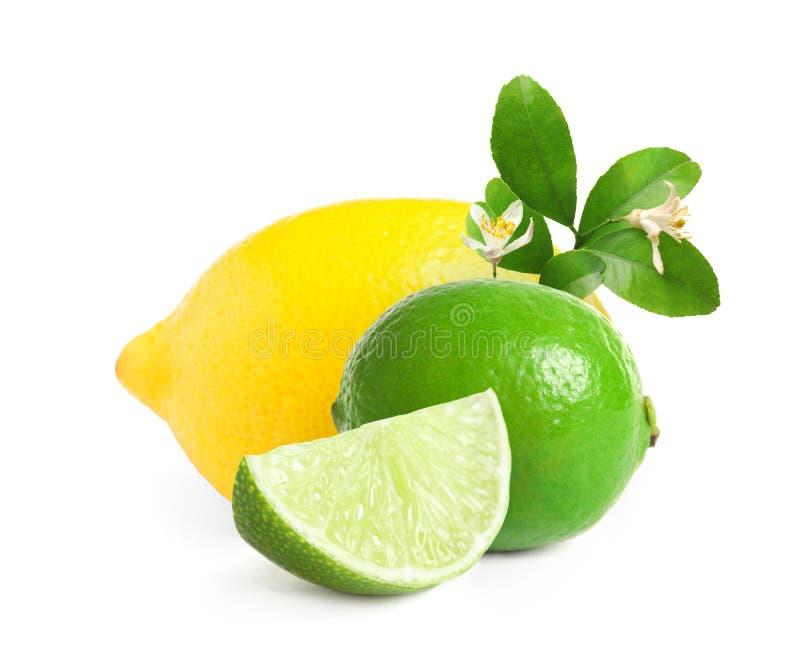 Set of juicy citrus fruits. On white background stock photo