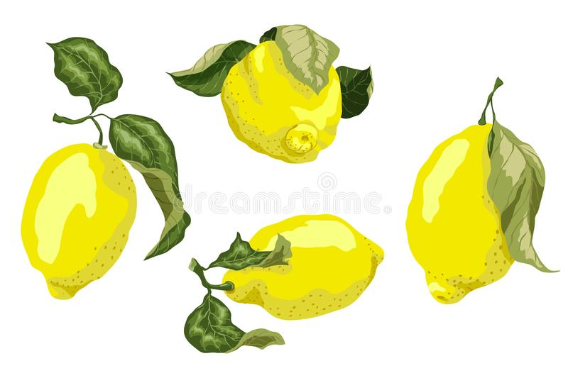 Set with juicy lemon fruits in graphic colored design dra vector illustration