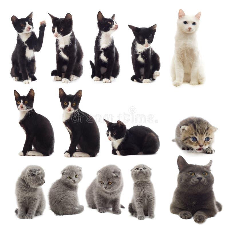 Set Katzen stockbilder