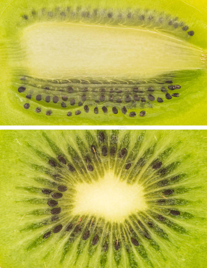 A set of kiwi close up macro shots royalty free stock photo
