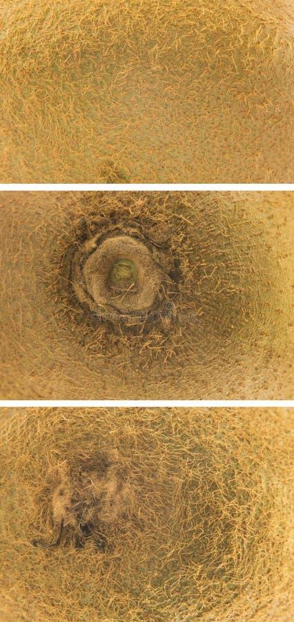 A set of kiwi peel close up macro shots stock image