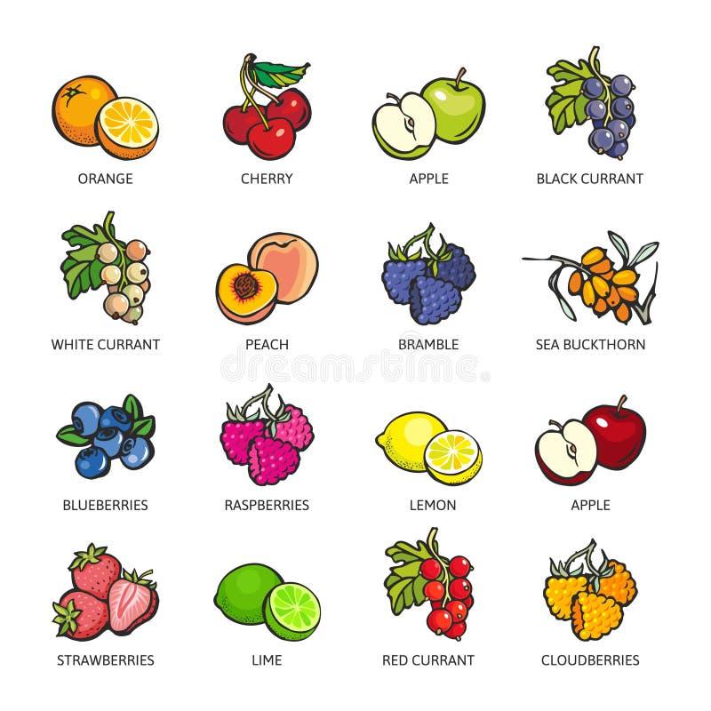 Set kolorowe jagody i owoc royalty ilustracja