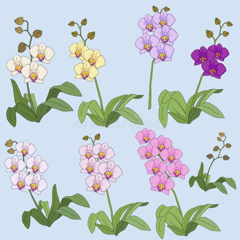 Set Kolorowe orchidee z liśćmi wektorowymi obraz royalty free