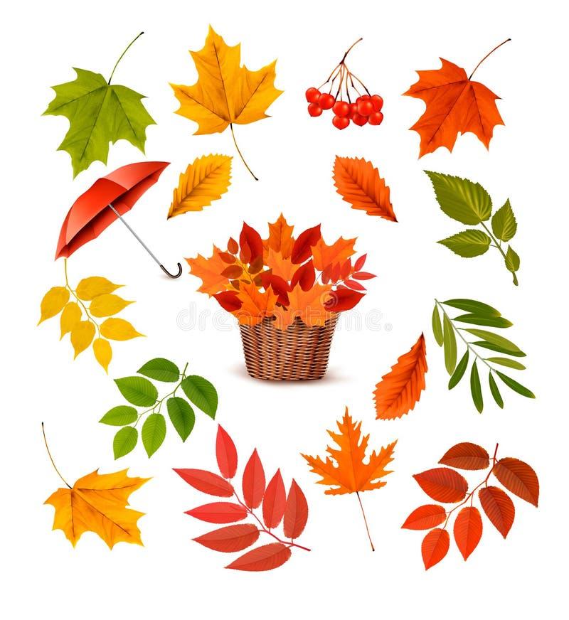 Set kolorowi jesień liście, przedmioty i ilustracji