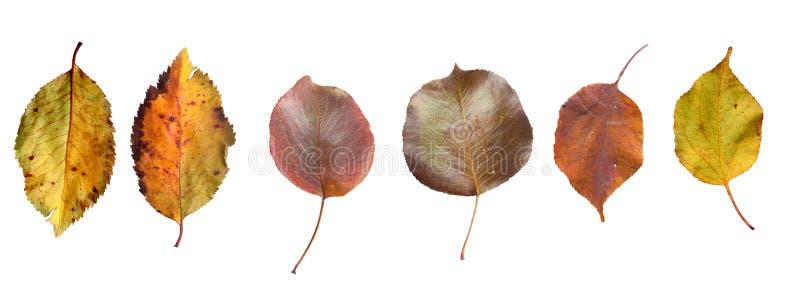 Set koloru żółtego i zieleni jesieni liście zdjęcie royalty free