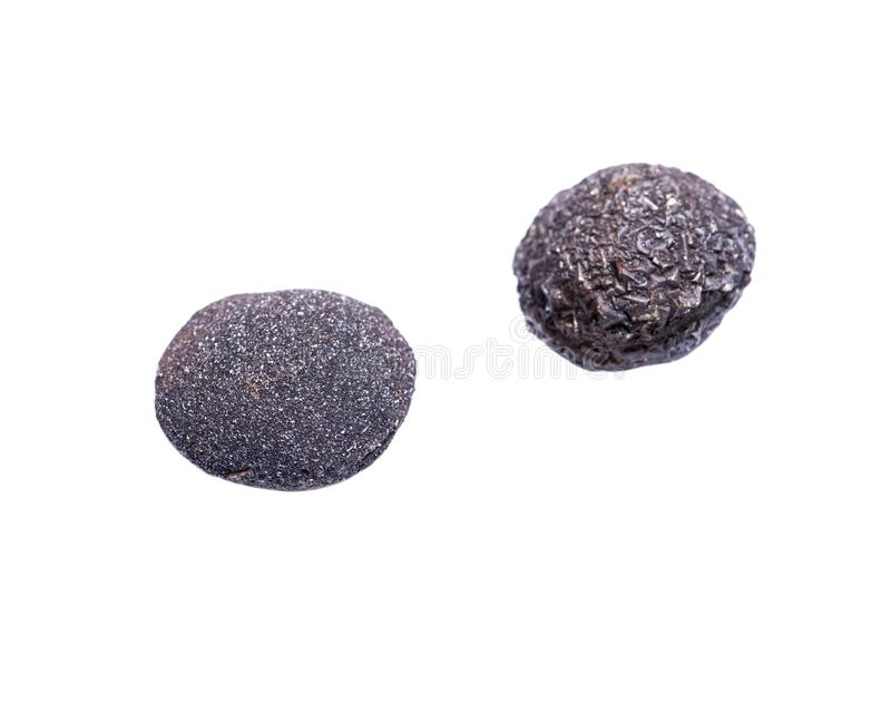 Set konkrecja kamienie od południowo-zachodni Kansas, usa Kansas wystrzału skały odizolowywać na bielu Zawiera samiec krystalizuj fotografia stock