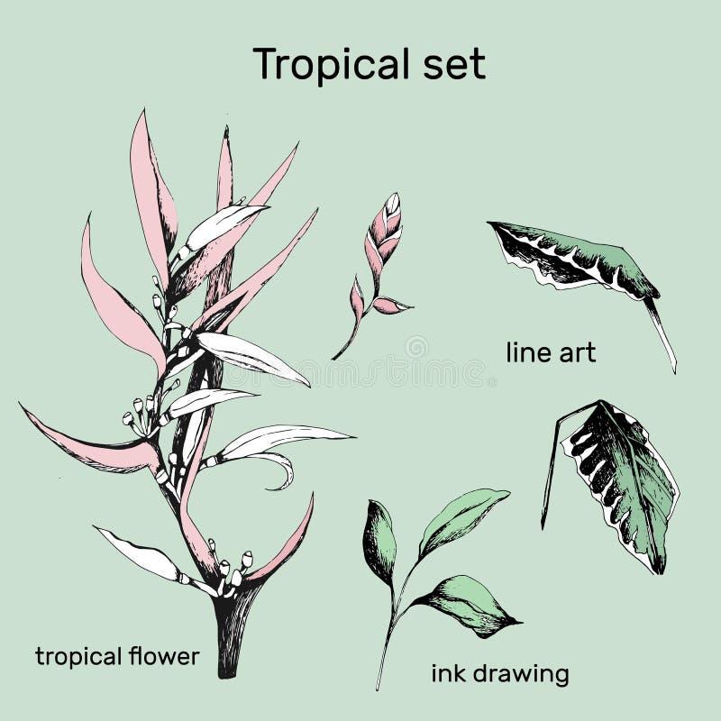 Set konturowi wektorowi kwiaty Ręka rysująca rozgałęzia się i opuszcza tropikalne rośliny Monochromatyczny kwiecisty wzór Helicon ilustracja wektor