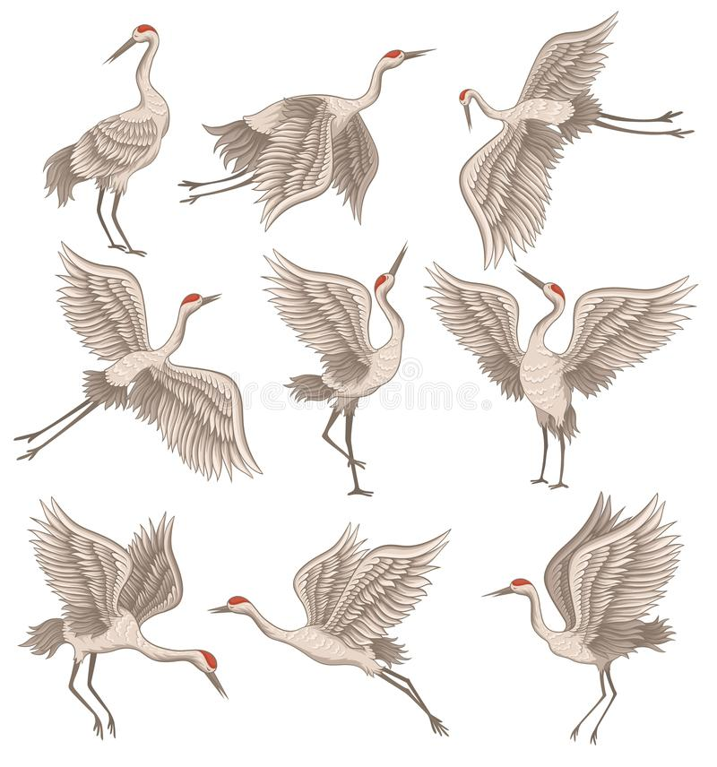 Set koronujący żuraw w różnych pozach Dziki ptak z długim belfrem, nogami i szyją, Dekoracyjny płaski wektor royalty ilustracja