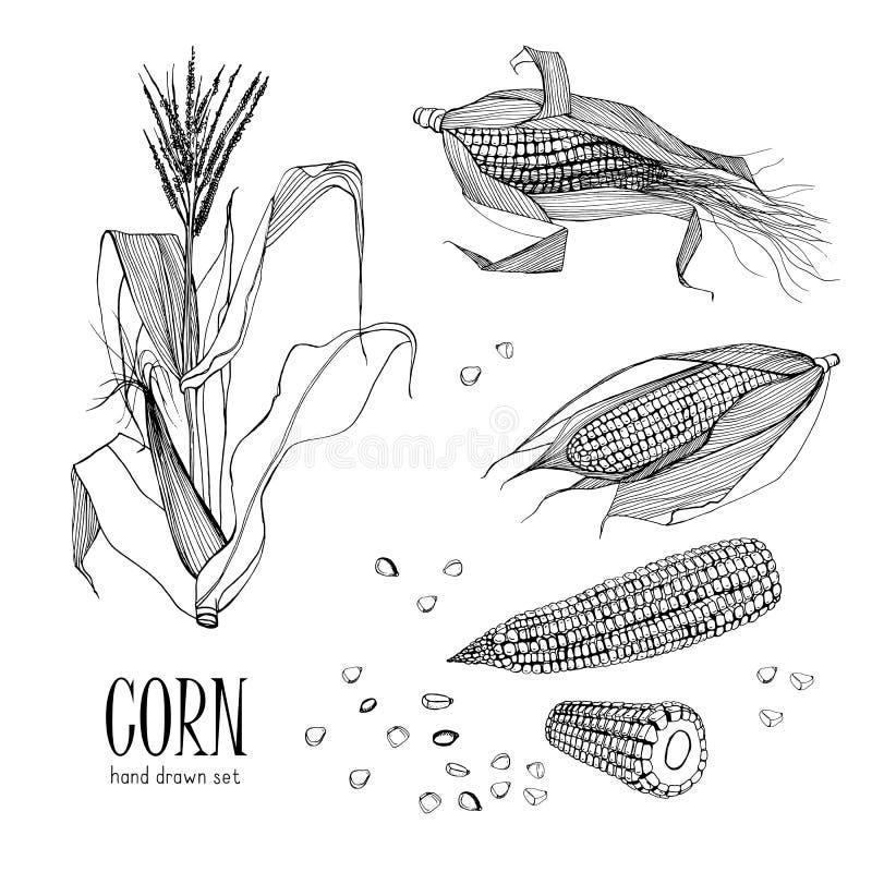 Set kukurydzana roślina Konturowa czarny i biały ręka rysująca inkasowa kukurydza również zwrócić corel ilustracji wektora royalty ilustracja