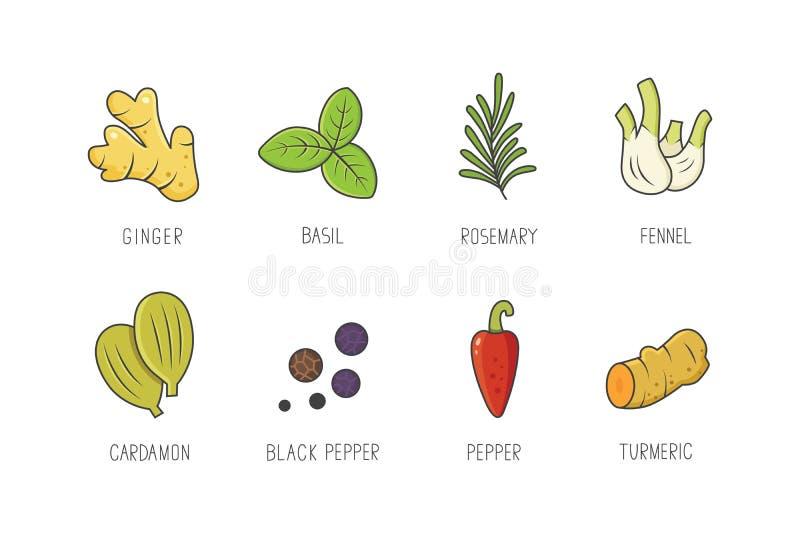 Set kulinarne pikantność i ziele dla twój kuchennego projekta lub menu Condiments inkasowi ziele w liniowym stylu ilustracji