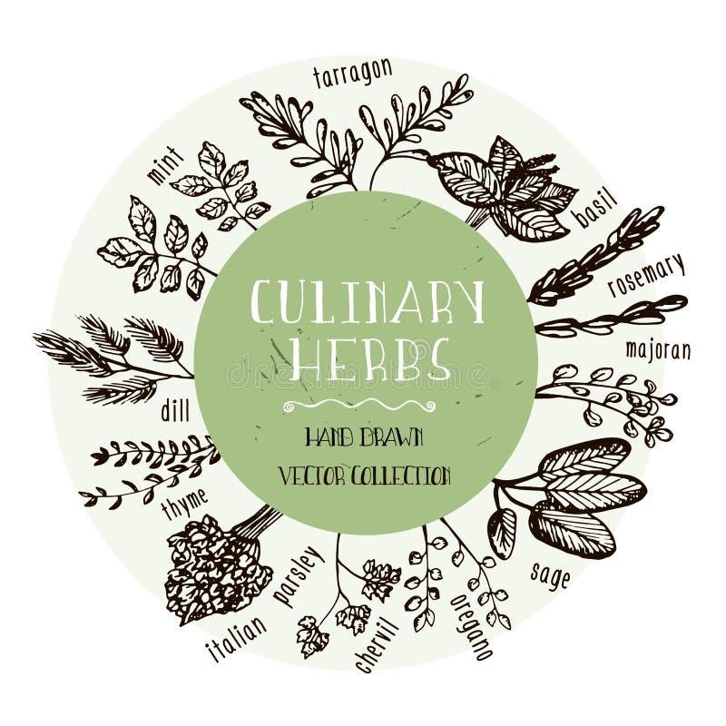 Set Kulinarni ziele Ręki rysujący ziele inkasowi również zwrócić corel ilustracji wektora ilustracja wektor