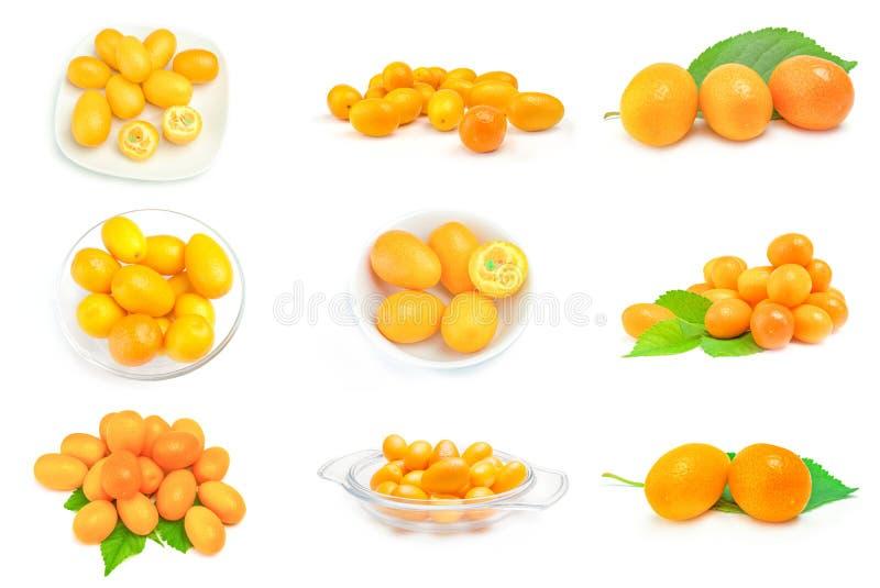 Set kumquats obrazy stock