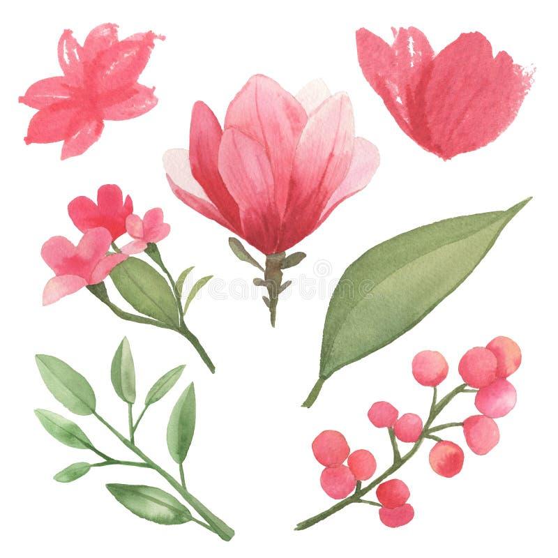 Set kwiaty, liście i gałąź elementy, ilustracja wektor