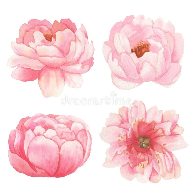 Set kwiaty, liście i gałąź elementy, royalty ilustracja