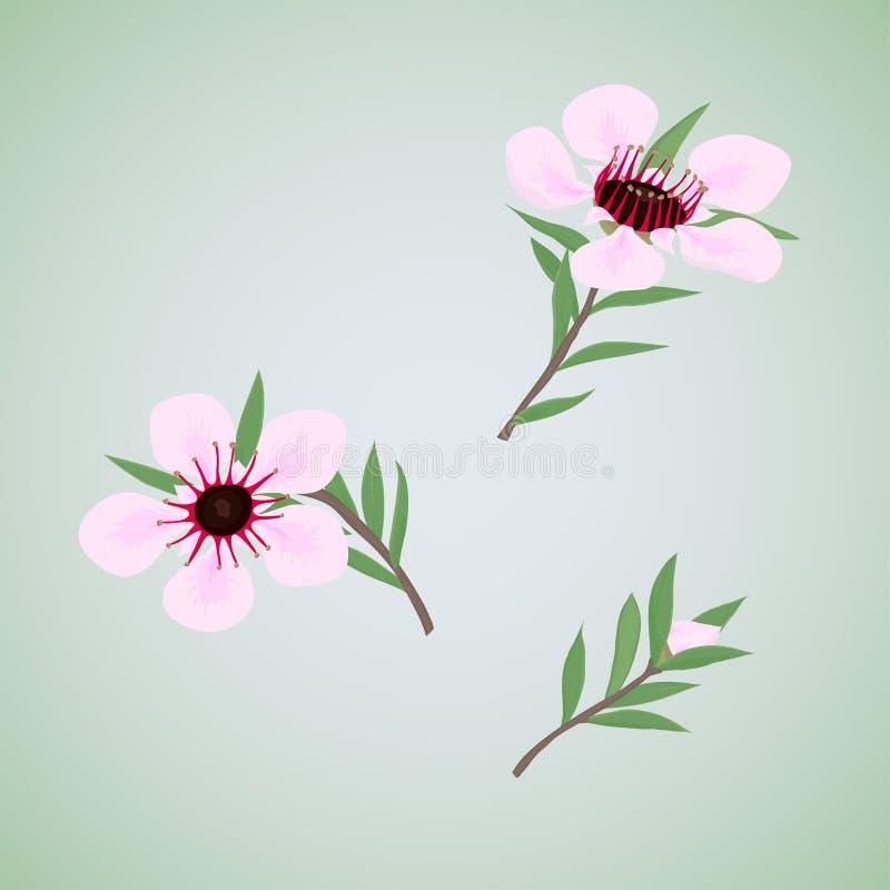 Set kwiaty Manuka royalty ilustracja