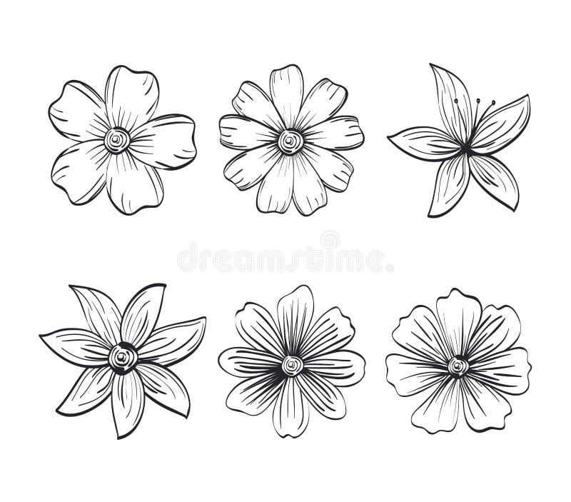 Set kwitnie nieociosaną i monochromatyczną dekorację, ilustracja wektor