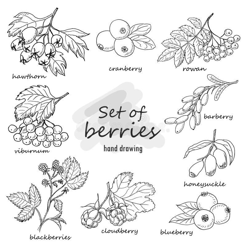 Set lasowe jagody royalty ilustracja
