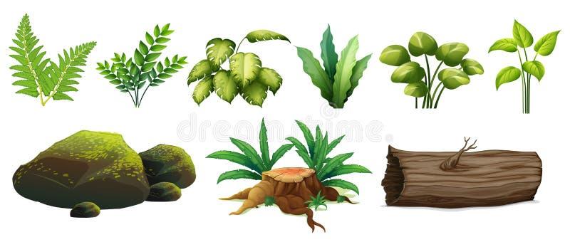 Set Lasowy element royalty ilustracja
