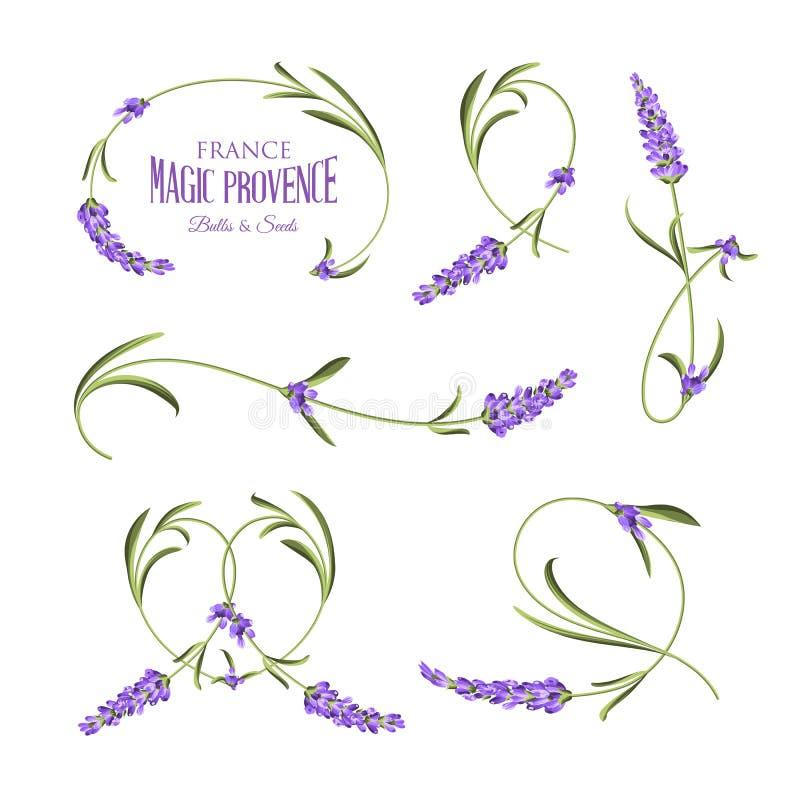 Set lawenda kwitnie elementy ilustracji