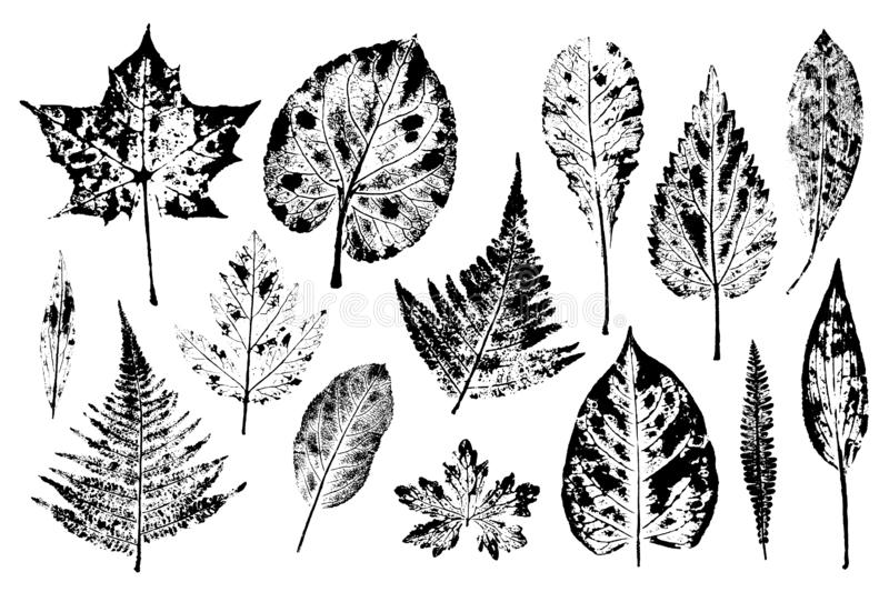 Set of leaf prints. Autumn herbarium stamps leaves of trees and herbs: nettle, lily of the valley, ferns and others. Overlay template. Vector illustration stock illustration