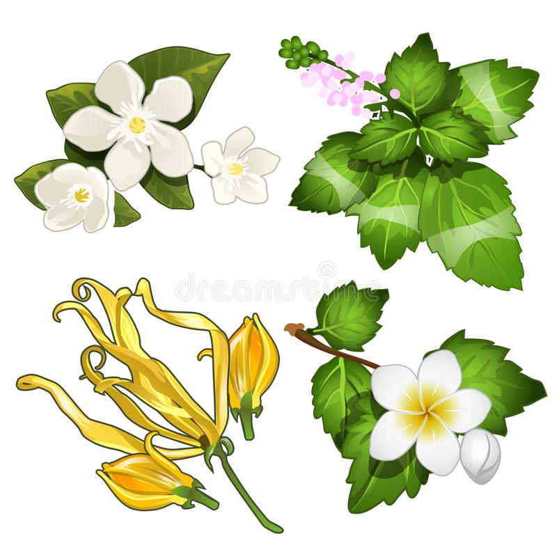Set of leaves, flowers, branches of apple. Beautiful herbal and floral herbarium. Image in cartoon style. Vector illustration isolated on white background vector illustration