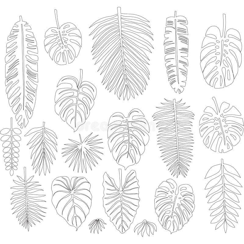 Set liście w konturowym stylu tropikalne palmy ilustracji