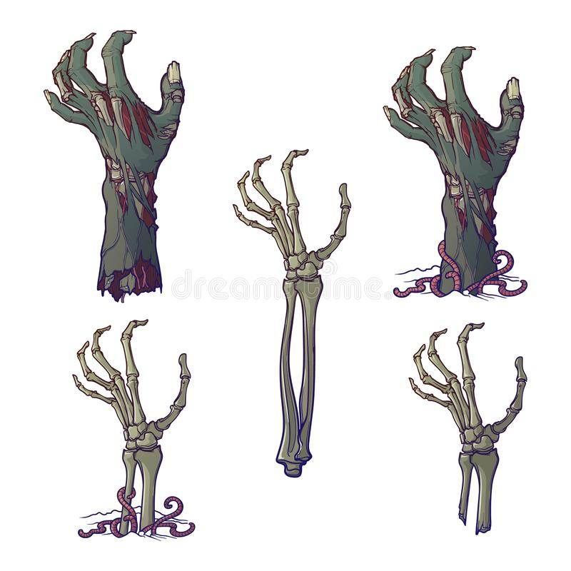 Set of lifelike depicted rotting zombie hands and skeleton hands rising. From under the ground and torn apart. Painted linear drawing isolated on white royalty free illustration