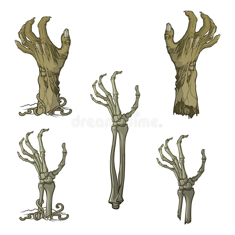 Set of lifelike depicted rotting zombie hands and skeleton hands rising from under the ground and torn apart. Painted. Set of lifelike depicted rotting zombie royalty free illustration