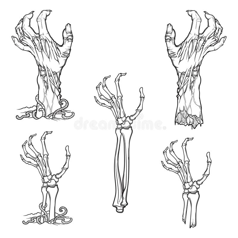 Set of lifelike depicted rotting zombie hands and skeleton hands rising. From under the ground and torn apart. Linear drawing isolated on white background vector illustration