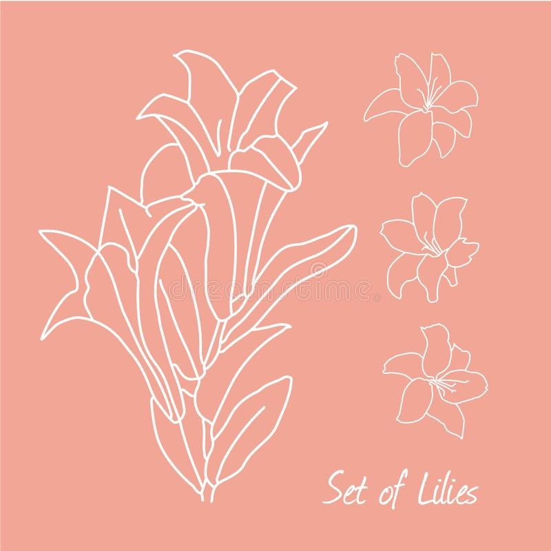 Set of lily flowers drawings. vector illustration. line drawn flower. botanical art royalty free illustration