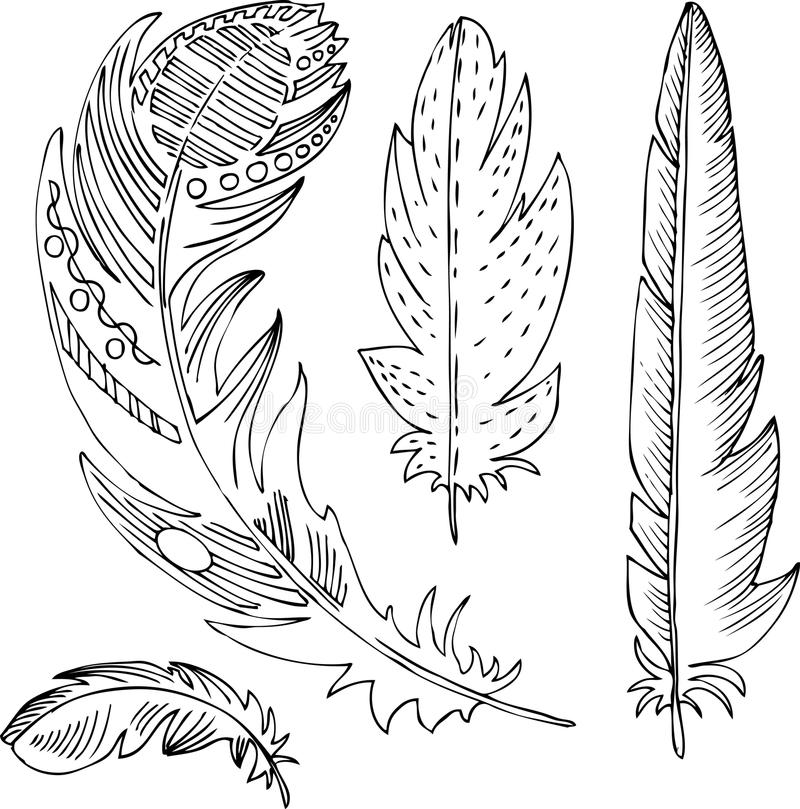 Line Art Feather : Set of line drawing feathers stock vector illustration
