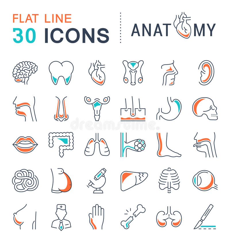 Set Of Line Icons Of Anatomy And Physiology Stock Illustration ...