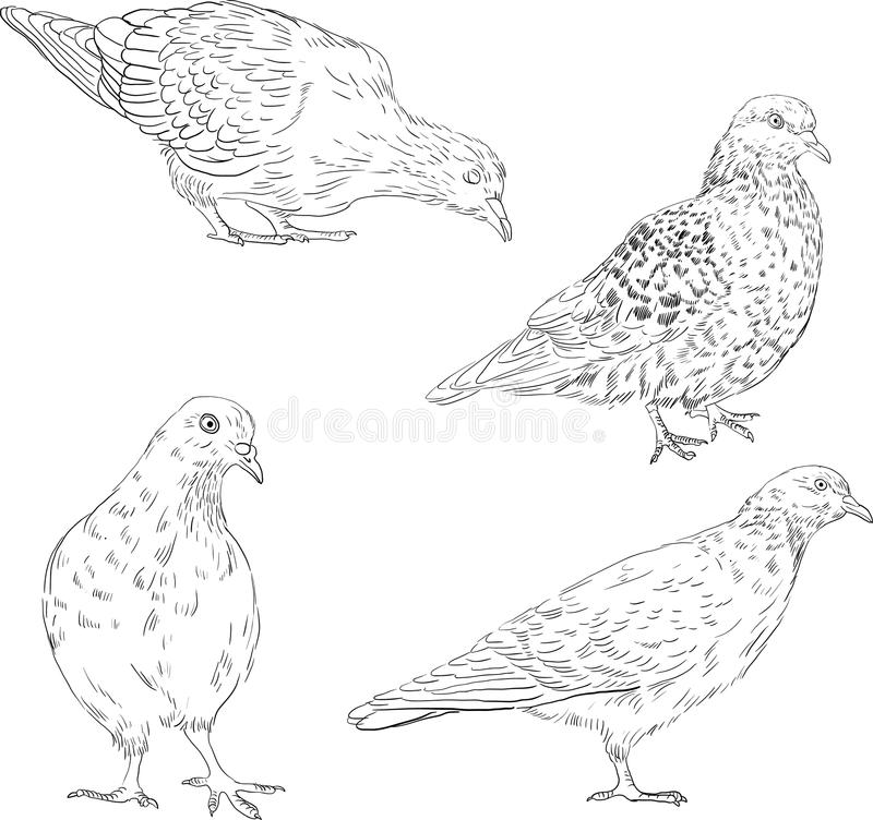 download set of linear drawing doves stock vector image 38165865