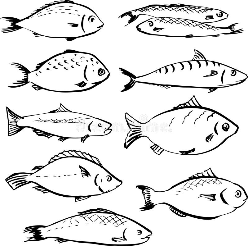 Set of linear drawing fishes vector illustration