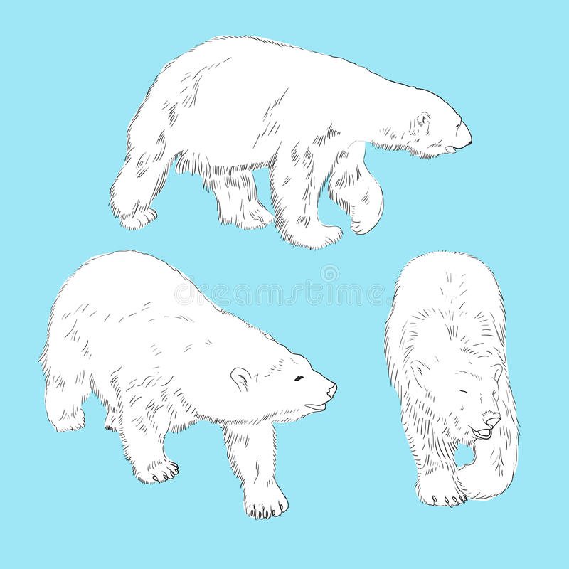 Download Set Of Linear Drawing Polar Bears Stock Vector - Image: 32790871
