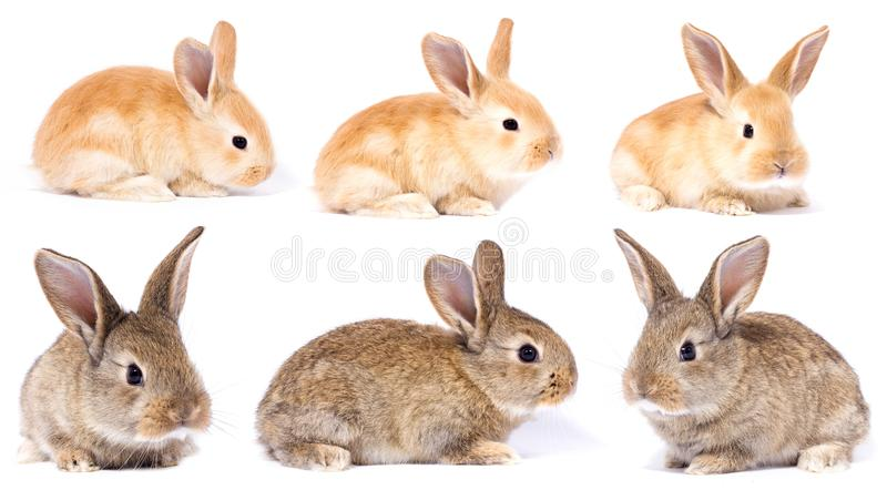 Set of little fluffy bunnies royalty free stock images