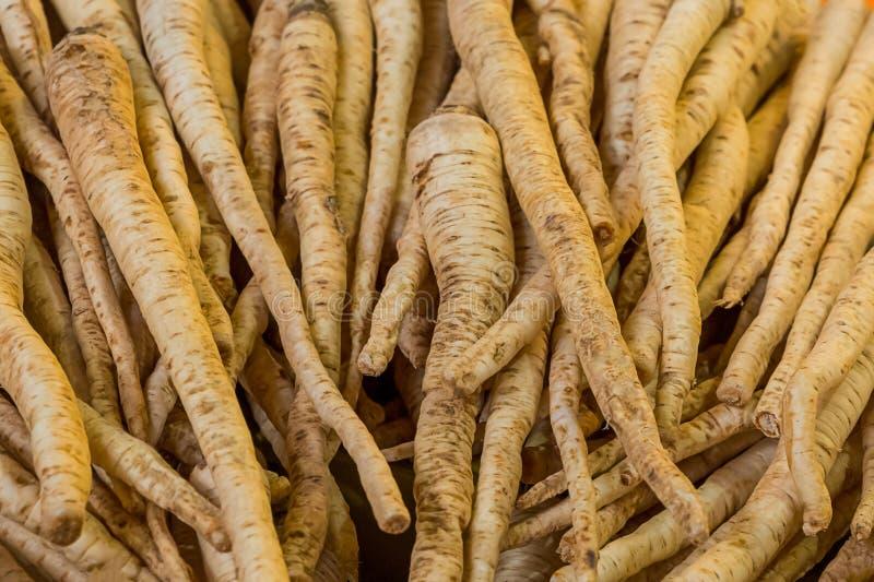 Set of long beige root coriander many fruits base vegetable basis ingredients vegan soup healthy appetizer royalty free stock images